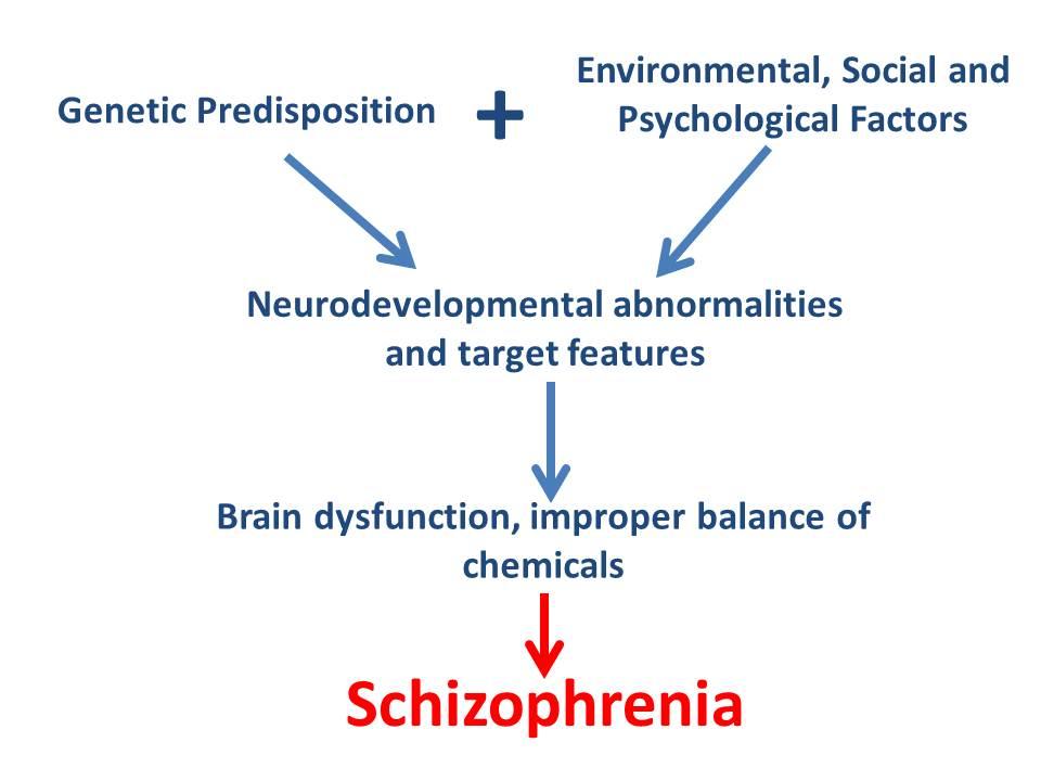 Psychological and interpersonal factors in schizophrenia : Schizophrenia flowchart