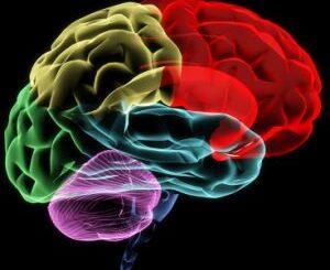 memory: Brain scan
