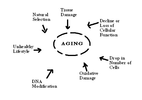 Physiological Problems during Old Age: aging-factors