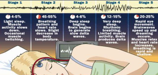 Why is sleep important: Sleep stages of depth